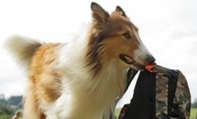 ÓKK- Békásmegyeri Közösségi Ház - Békási Kertmozi: Lassie hazatér